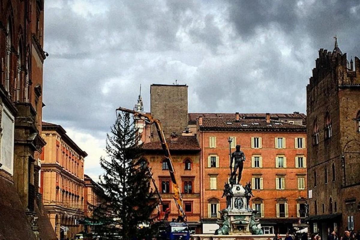 Natale 2015: è arrivato l'albero in Piazza Nettuno